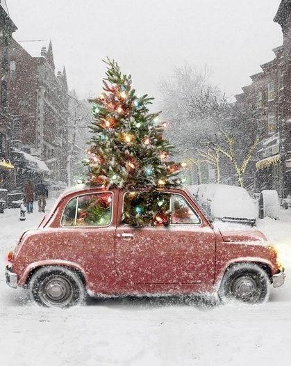 christmastreecar
